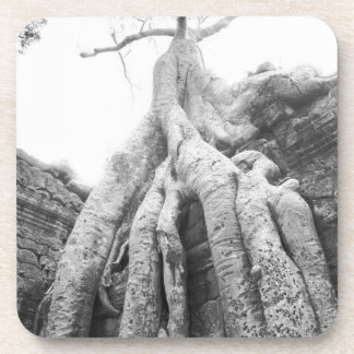 Angkor Cambodia, Tree Ta Prohm Coaster