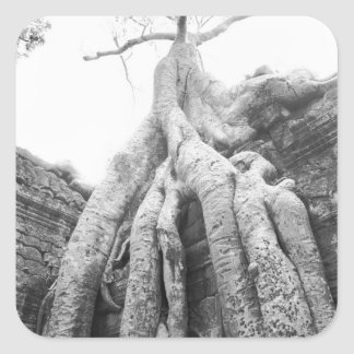 Angkor Cambodia, Tree Ta Prohm Square Sticker