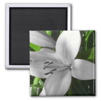 Angled Black and White Lily Square Magnet
