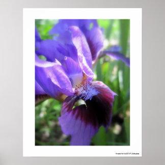Angled Iris Poster