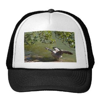 Angry Bird 3 Cap