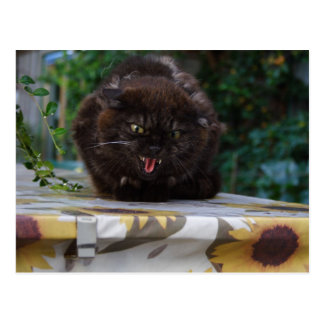 Angry Black Cat Postcard