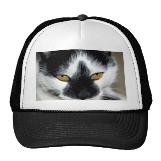 Angry Cat Hats