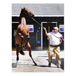 Angry Curlin Baby Postcard