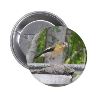 Angry Looking Bird 6 Cm Round Badge