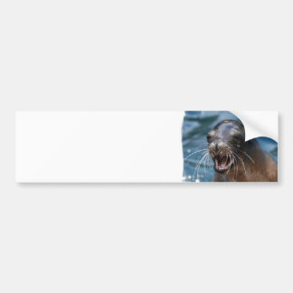 Angry Sea Lion Bumper Sticker