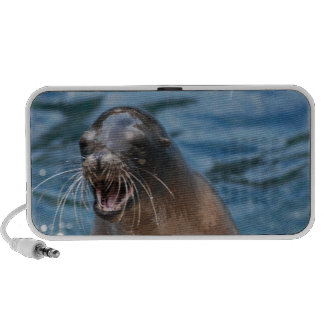 Angry Sea Lion Speakers