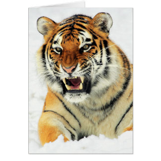 Angry tiger lying in snow greeting card