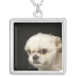 Angry white Shih Tzu with brown eyes Silver Plated Necklace