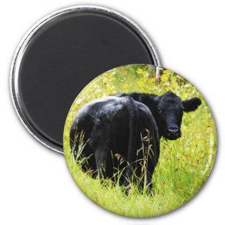 Angus Steer in Tall Yellow Grass Fridge Magnet