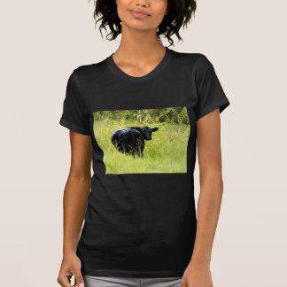 Angus Steer in Tall Yellow Grass Tshirts