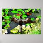 Anhinga bird, Everglades National Park, FL Poster