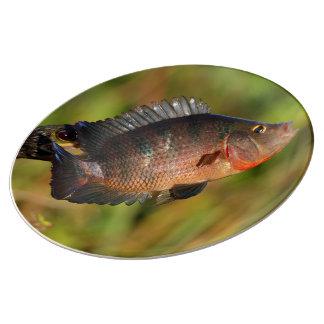 anhinga displaying a colorful fish porcelain plate