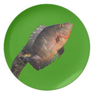 Anhinga displaying a colorful fish plates