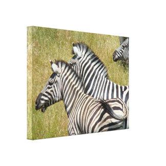 Animal African Safari Canvas prints Zebras