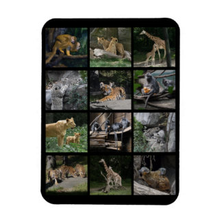 Animal Baby Collage Rectangle Magnets