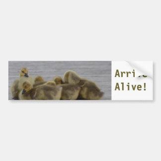 Animal Bird Canada Geese Bumper Sticker