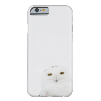 Animal Bird Snowy Owl Looking at Me Barely There iPhone 6 Case