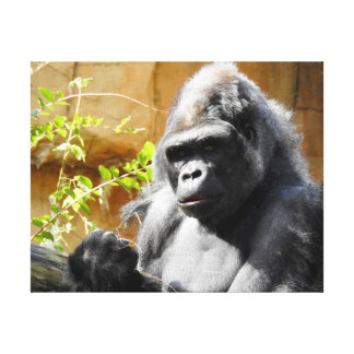 Animal Collection - Focused Gorilla Canvas Print