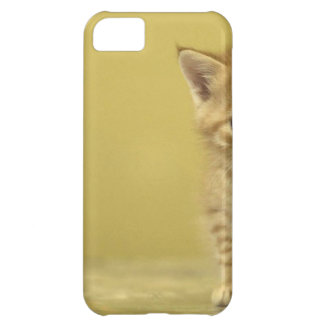 Animal - Curious Baby Kitten Case For iPhone 5C