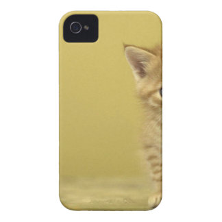 Animal - Curious Baby Kitten iPhone 4 Covers