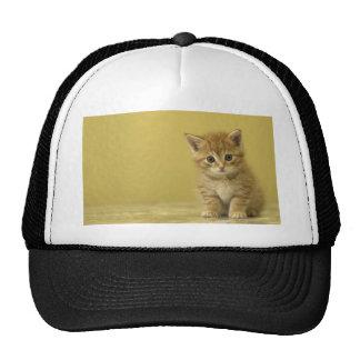 Animal - Curious Baby Kitten Mesh Hats