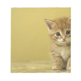 Animal - Curious Baby Kitten Notepad