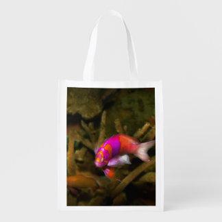 Animal - Fish - Pseudanthias pleurotaenia