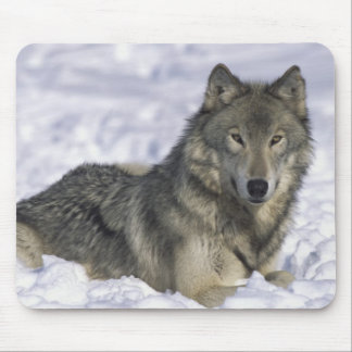 Animal In Snow Mouse Pad
