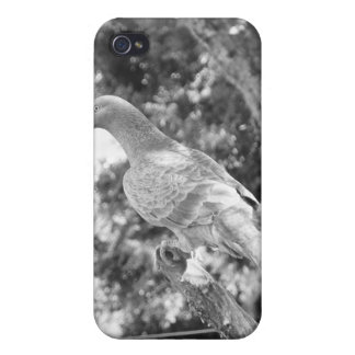 Animal Kingdom HD iPhone 4 Case - Pigeon