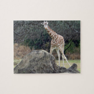 Animal kingdom Reticulated Giraffe Jigsaw Puzzle
