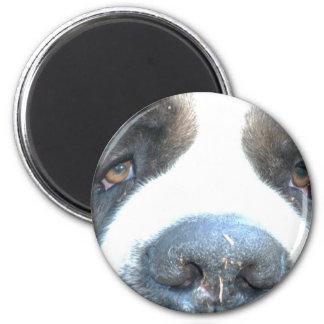 Animal Refrigerator Magnets