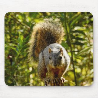 Animal Mousepad Series - Dashing Squirrel