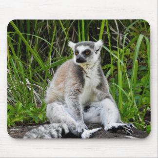 Animal Mousepad Series - Ring-Tailed Lemur
