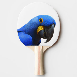 Animal parrot macaw tropical bird photo ping pong paddle