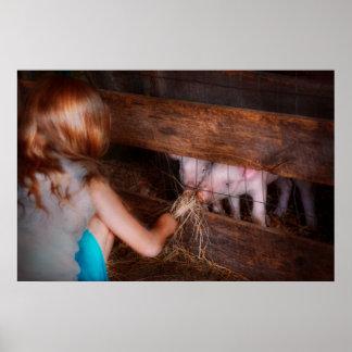 Animal - Pig - Feeding piglets Print