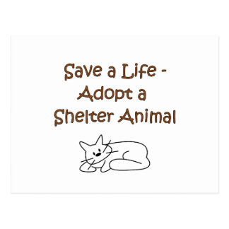 Animal Rescue Adoption Shelter Cat Postcard