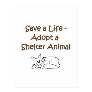 Animal Rescue/Adoption Shelter Cat Postcard