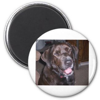 Animal rescue products 6 cm round magnet