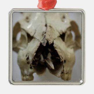 animal skull photograph christmas ornament