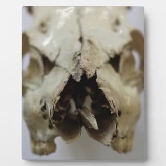 animal skull photograph plaque
