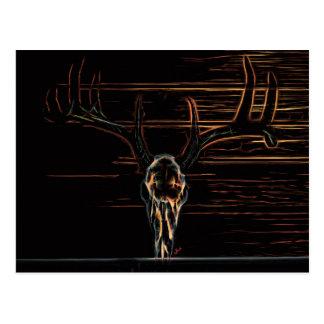 Animal Skull Postcard