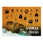 Animal Tracks Postcard