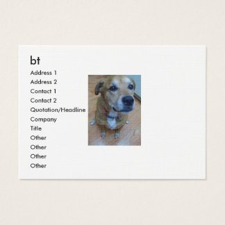 Animals_Dogs_Funny_dog_018014_ Business Card