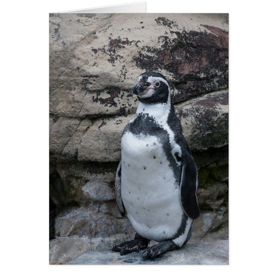 Animals greetings card featuring a penguin.