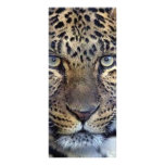 Animals in the Wild Customized Rack Card