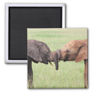 Animals kiss Magnet
