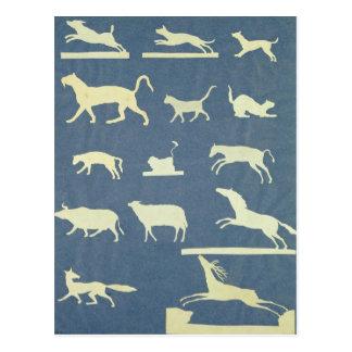 Animals Postcard