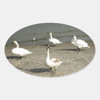 Animals Swan Oval Sticker