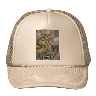 Anna the Cat Grooming Hat